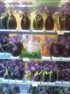 Dimanche 31 mars : Pâques ... A vos oeufs, poules, lapins, cloches en chocolat de qualité